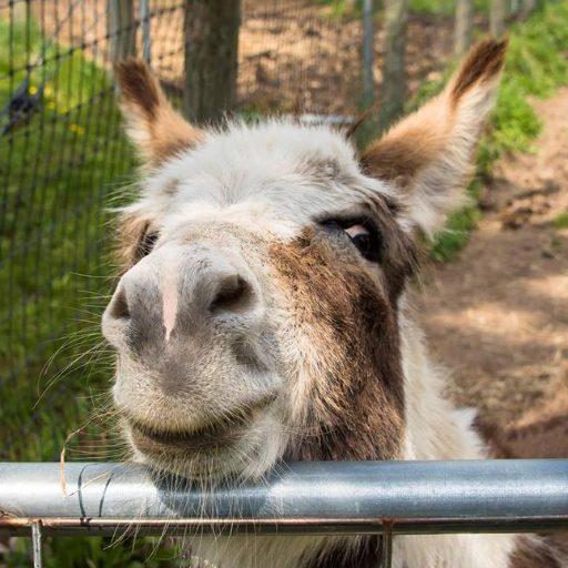 cropped-donkeynose2.jpg